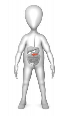 AppendixMan
